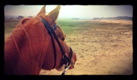 paardjerijden